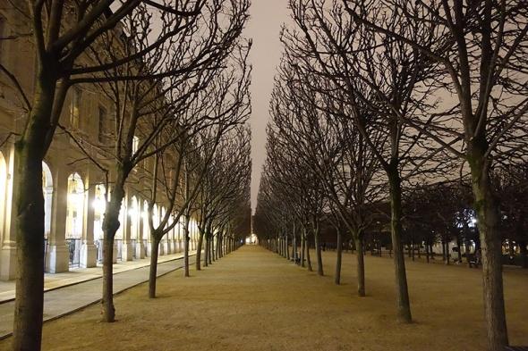 treesatpalaisroyal