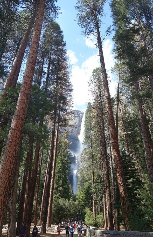 Yosemitefallstrees