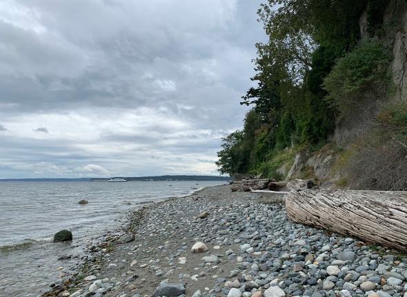 beach-driftwood