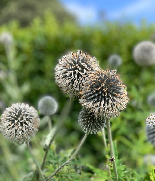 gardenballs